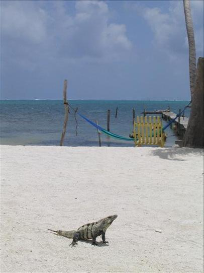 This iguana knows something
