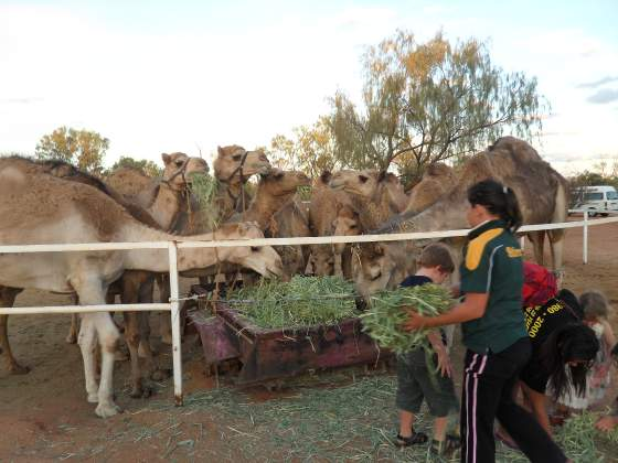 Feeding the Camels after our ride